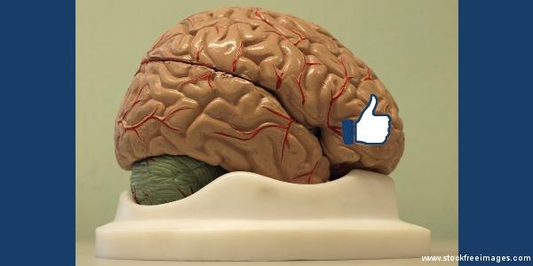 like brain